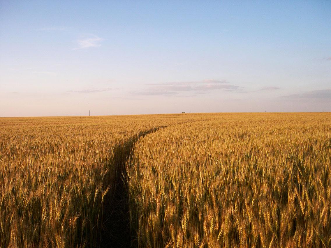 wheatcircleks